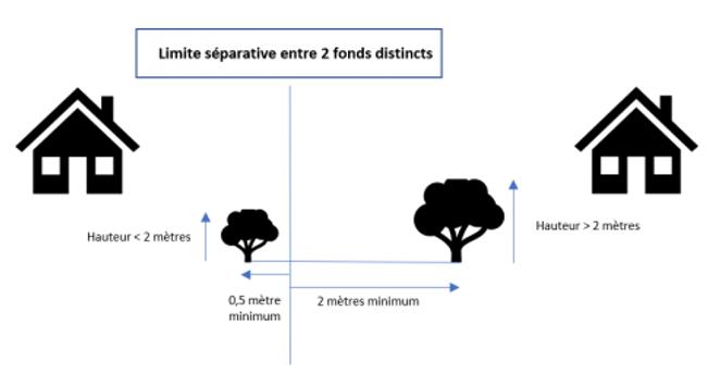 arbre, taille, hauteur, limite séparative, règlementation, plantation